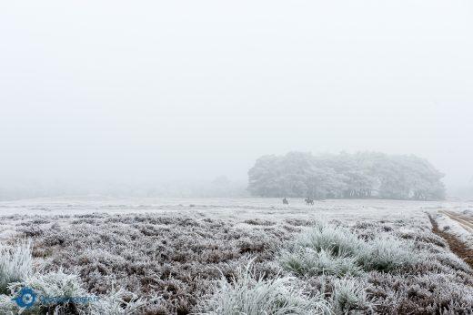 Huizen winter