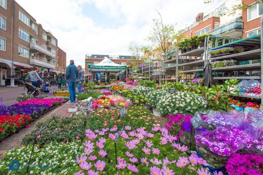 plantenmarkt huizen