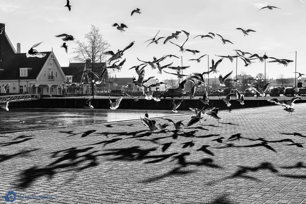 Vogeltelling, Huizen