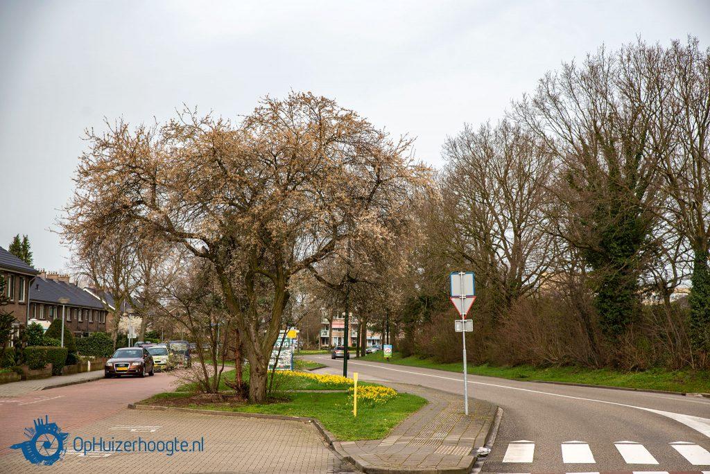 Lente Gooilandweg Huizen