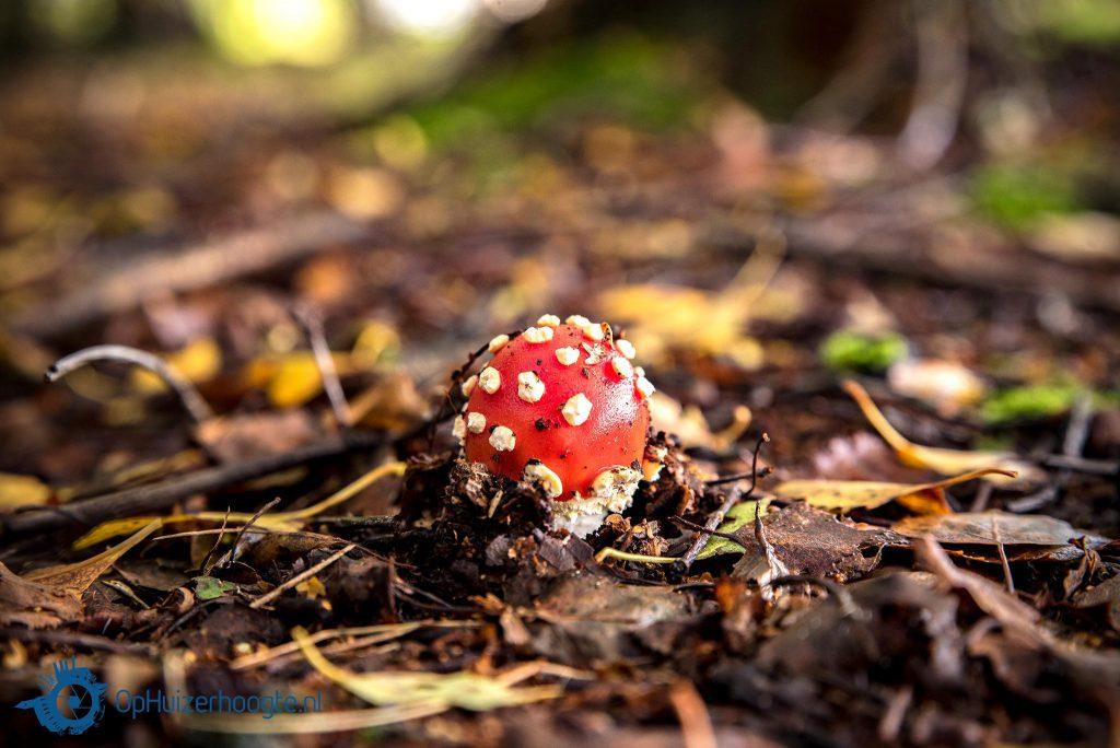 paddenstoelentijd hefst Huizen
