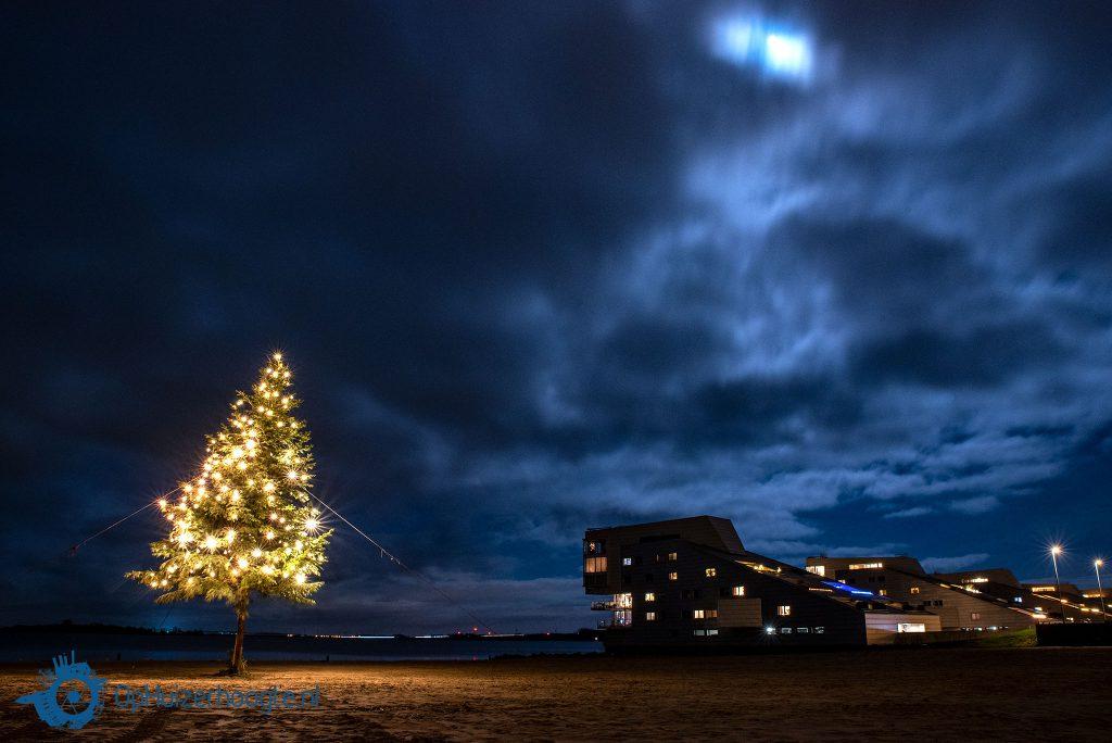 Kerstboom Harderwijkerzand