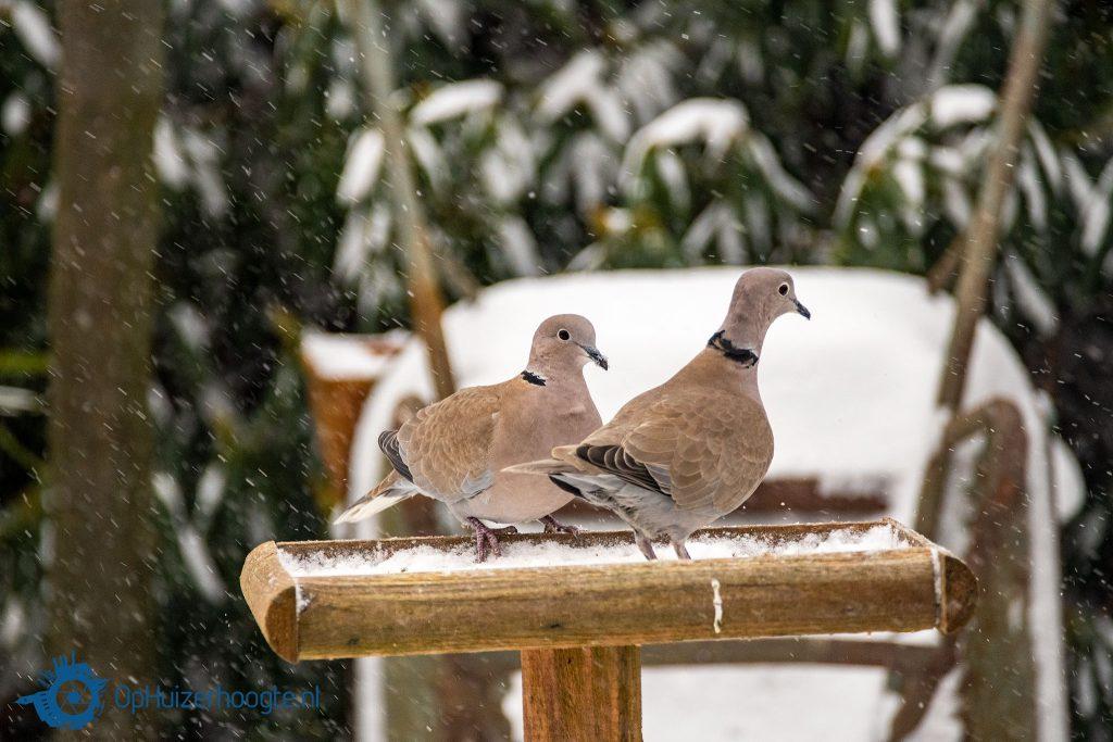Zorgen voor vogels en wilde dieren